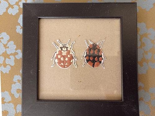 Cadre 2 insectes beige, marron et noir