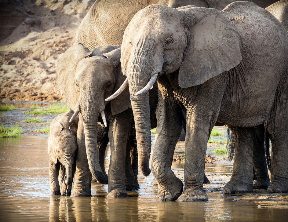 Elephant 48