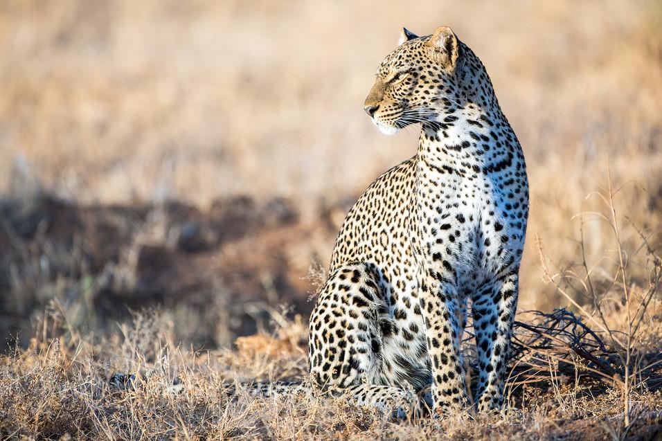 Leopard-4026.jpg