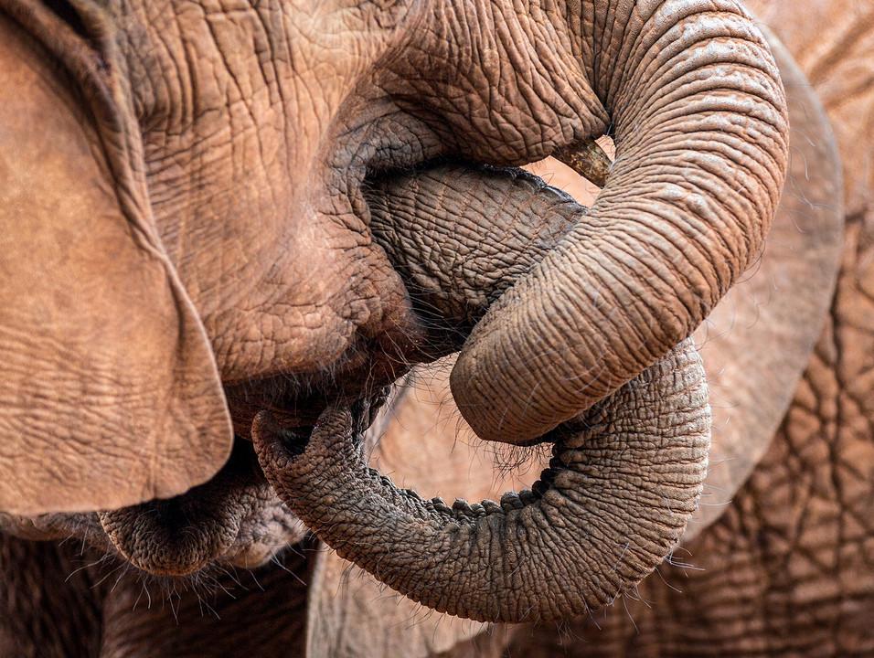 Elephant 31