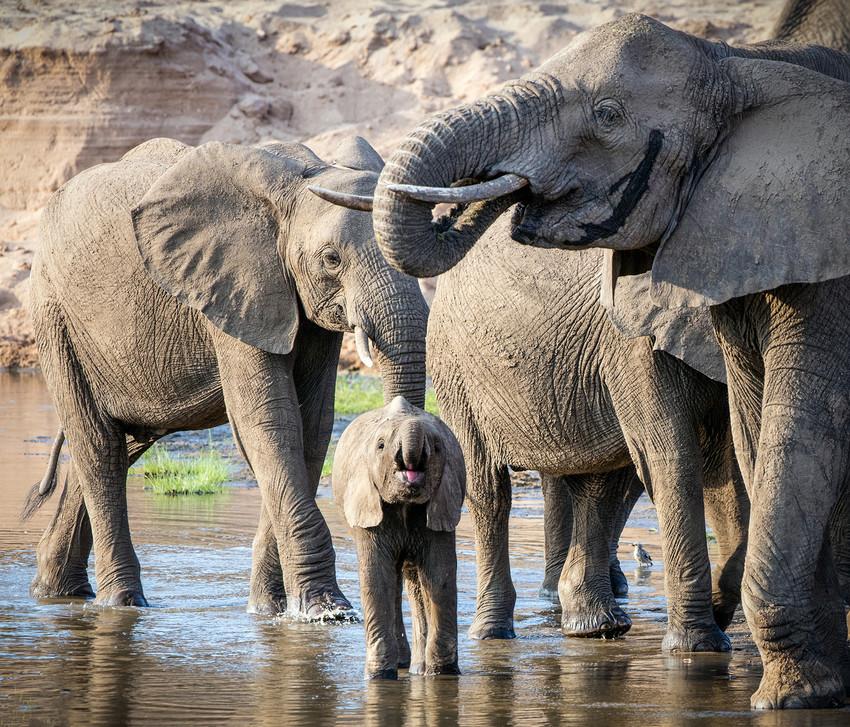 Elephant 47