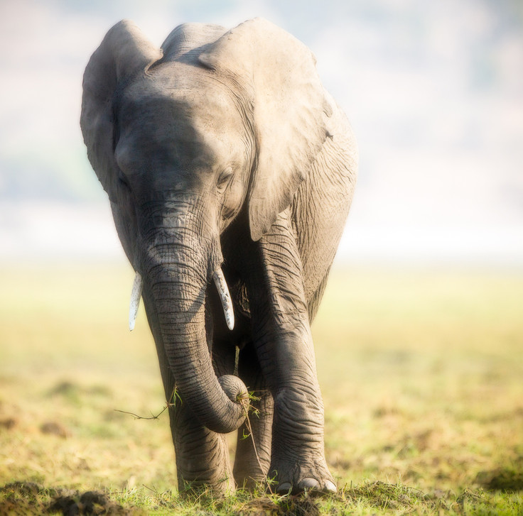 Elephant 26