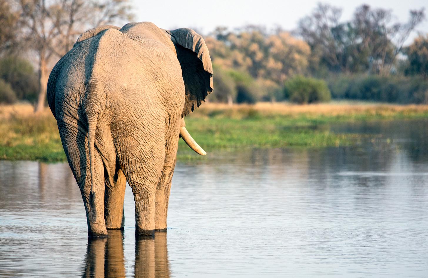 Elephant 39