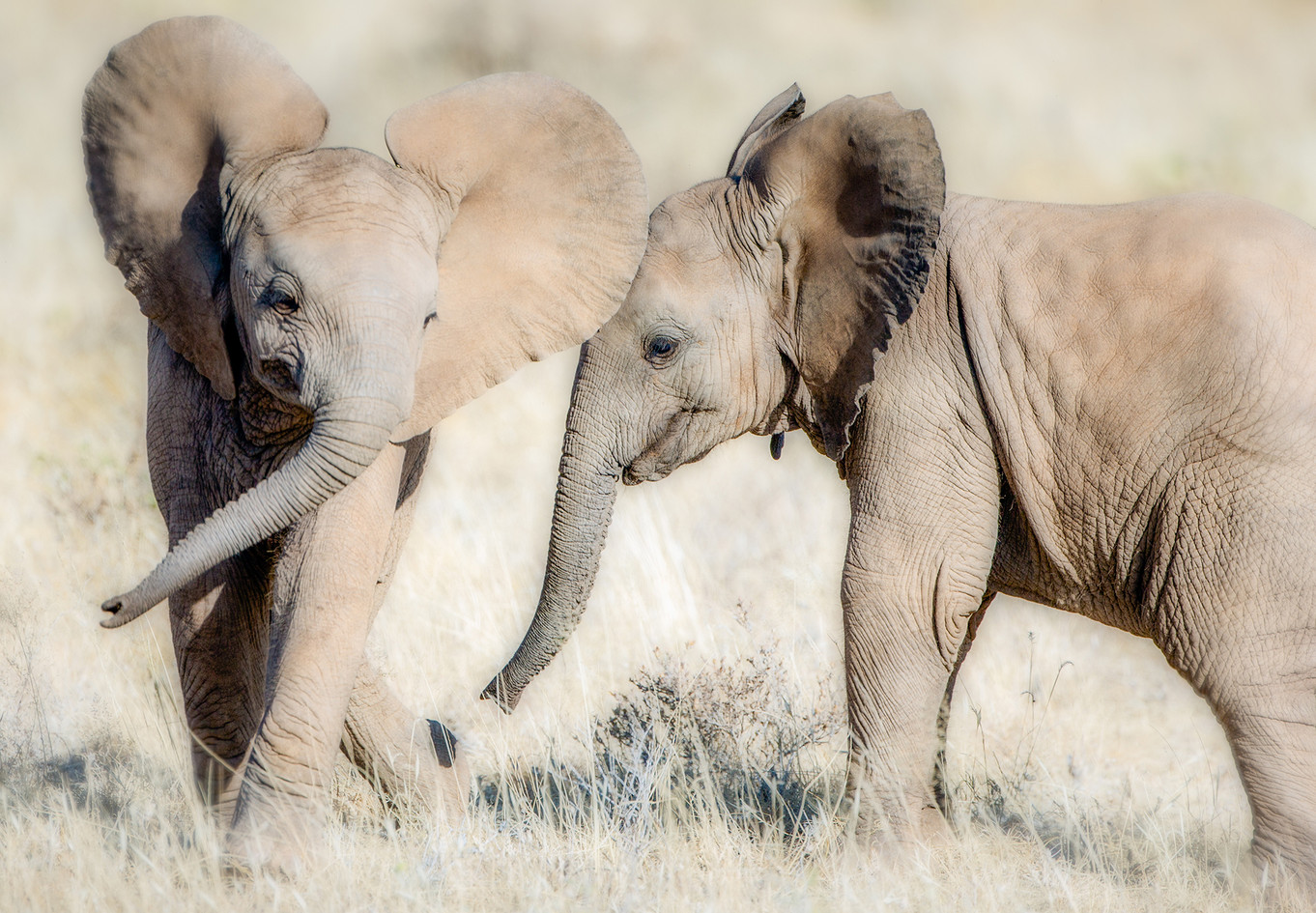 Elephant 28