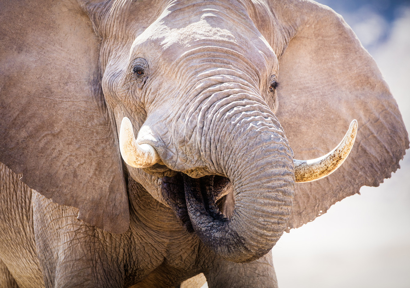 Elephant 49