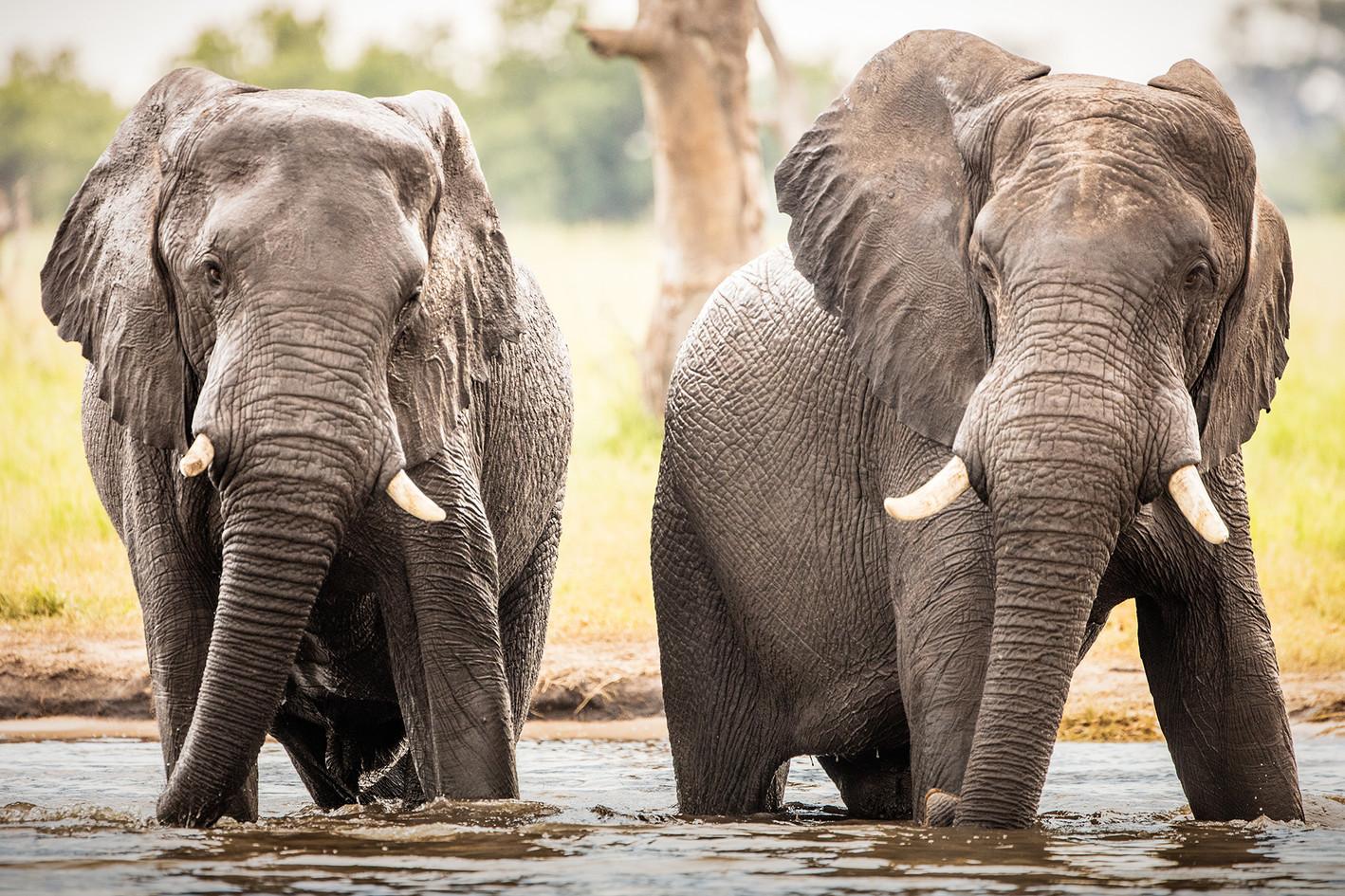 Elephant 34