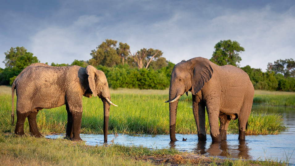 Elephant 41