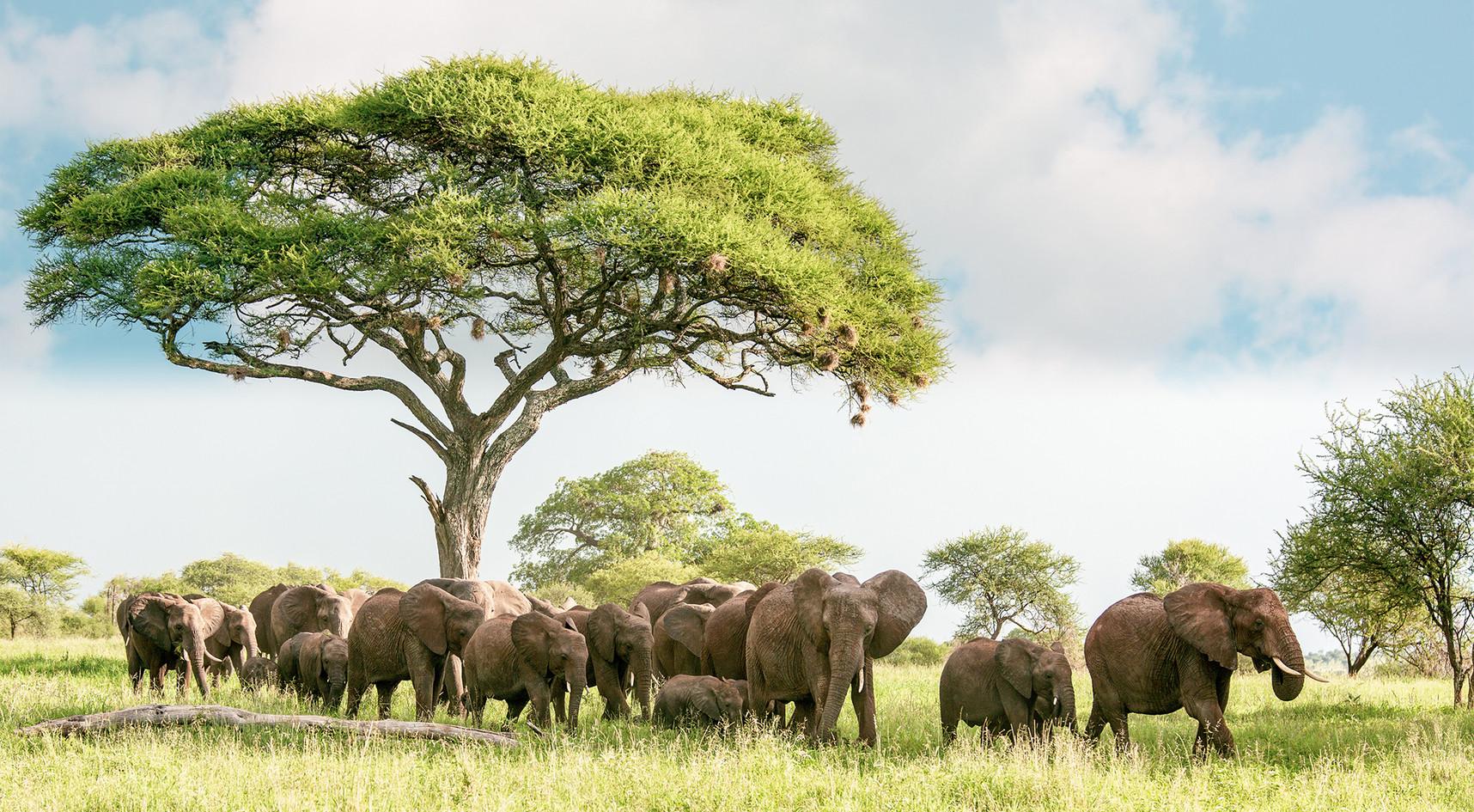 Elephant 14