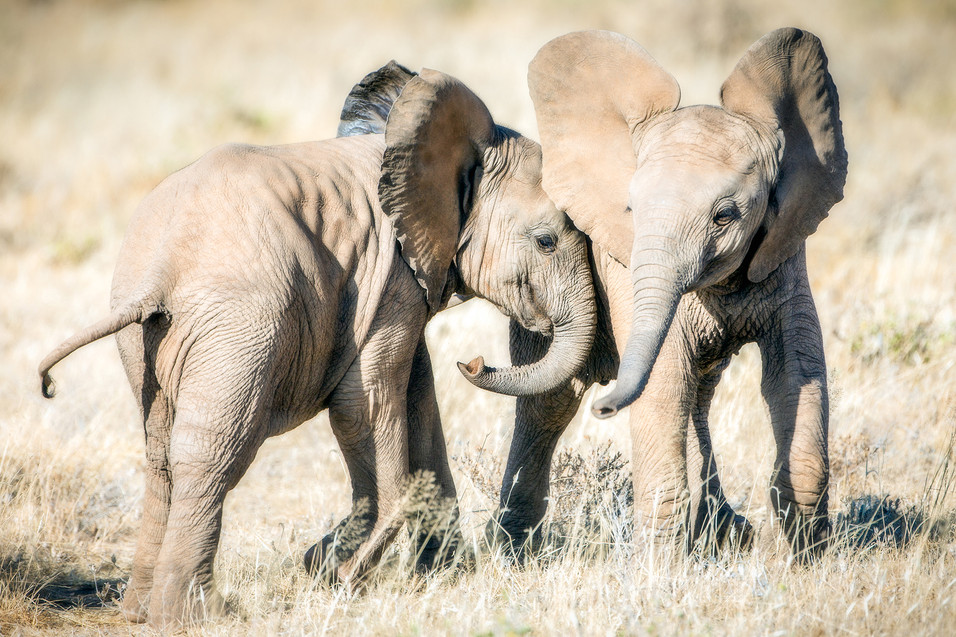 Elephant 29