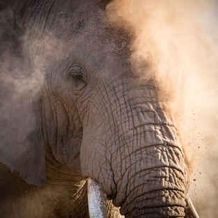 Elephants, Africa's Hearbeat