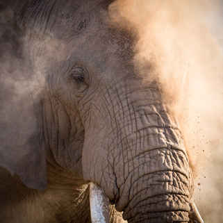 Elephants, Africa's Hearbeat