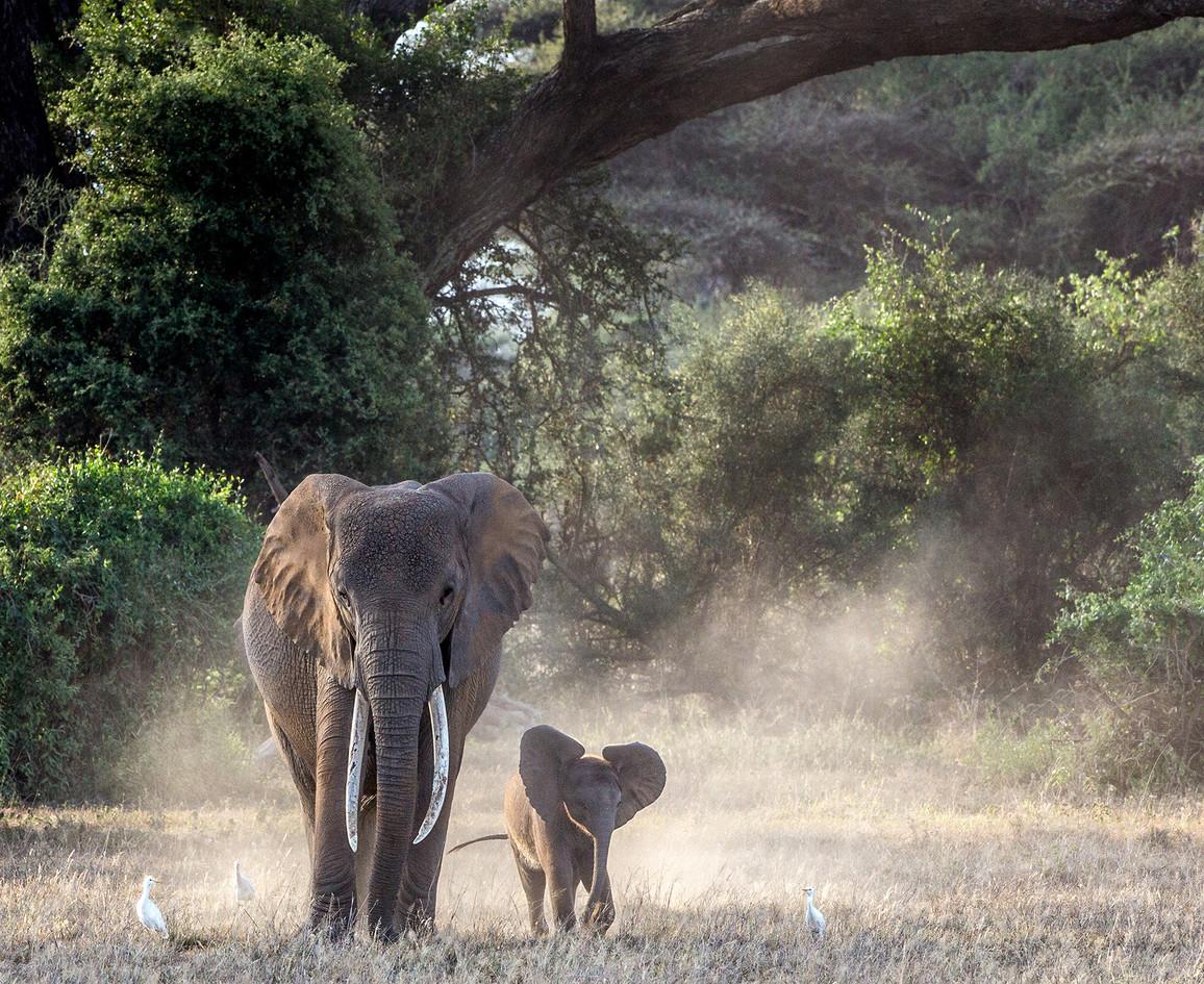Elephant 9