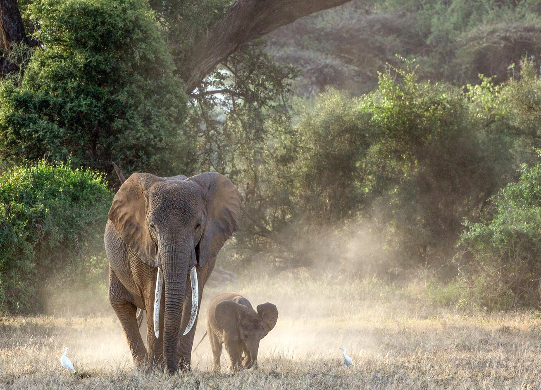 Elephant 8
