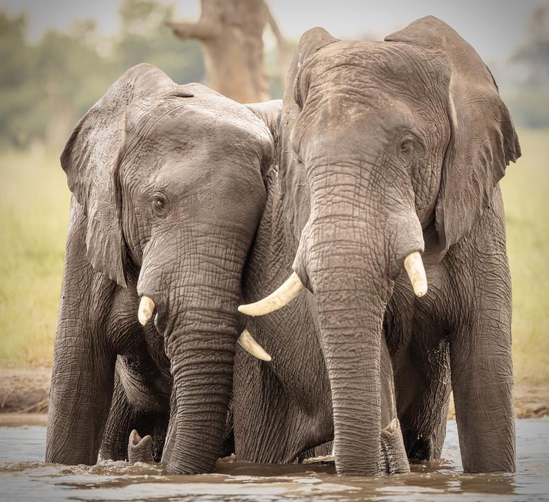 Elephant 35