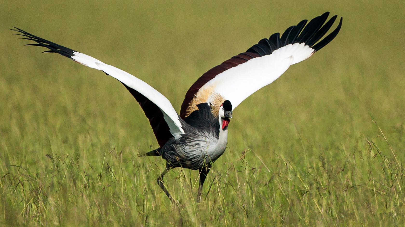 Crown Crane