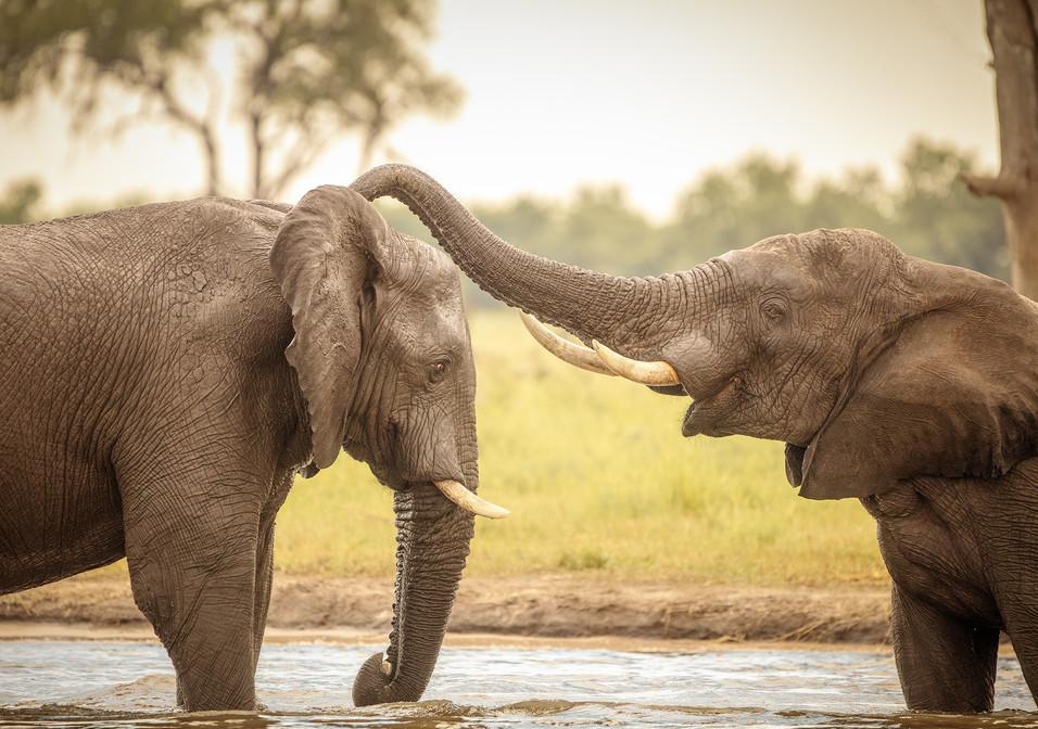 Elephant 33