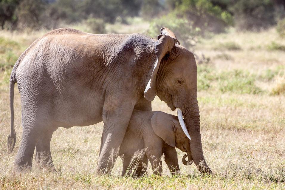 Elephant 23