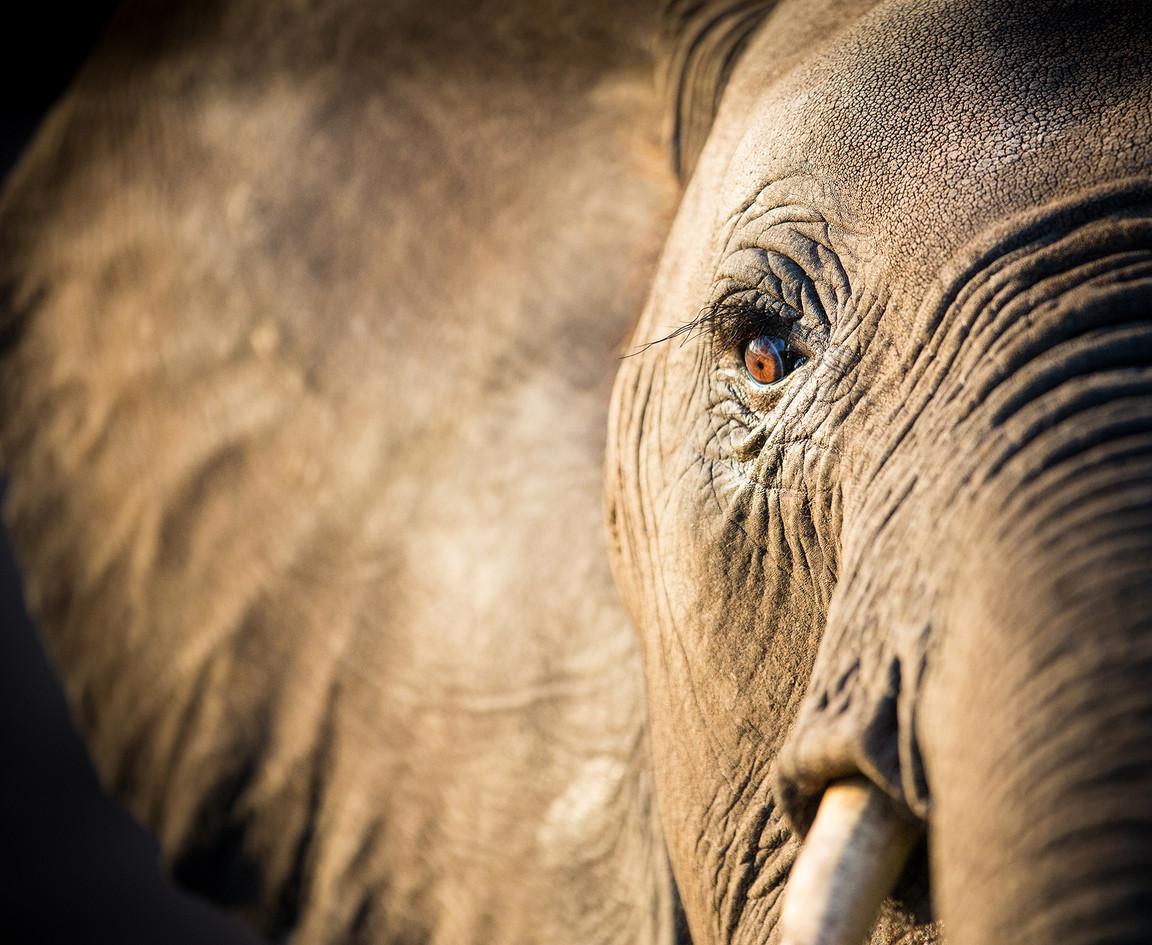 Elephant 20