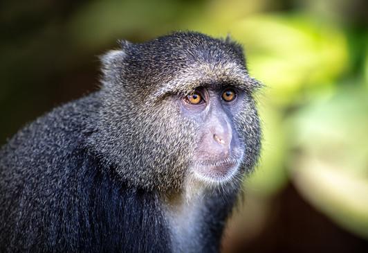 Blue Monkey 2