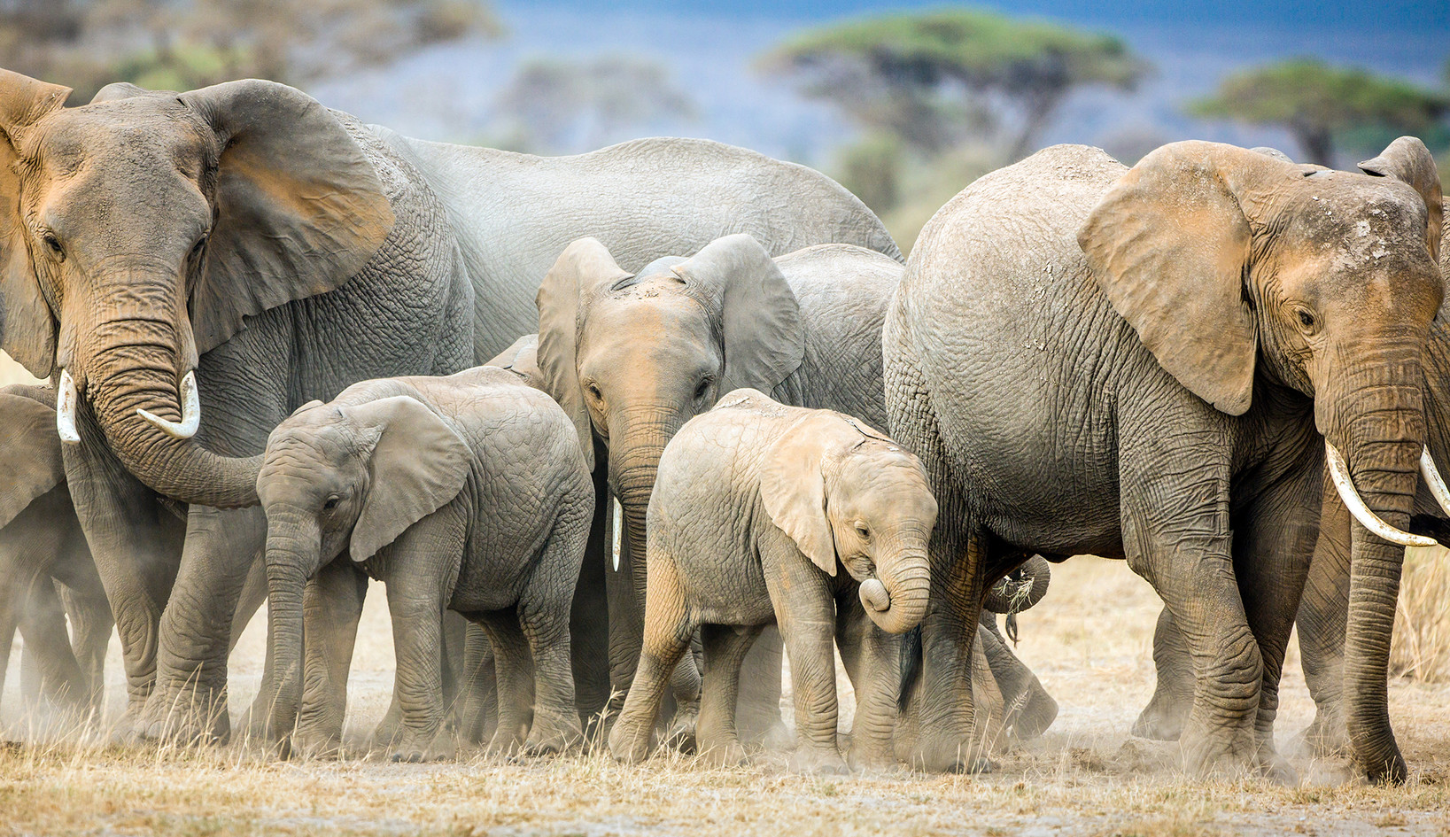 Elephant 46