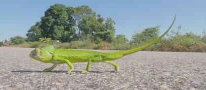 Dancing Chameleon