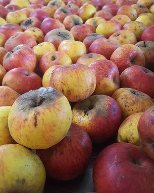 manzana criolla zacatlan