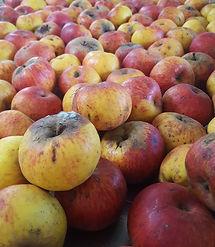 manzanas.jpeg