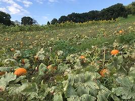 Pumpkinpatch21.jpg