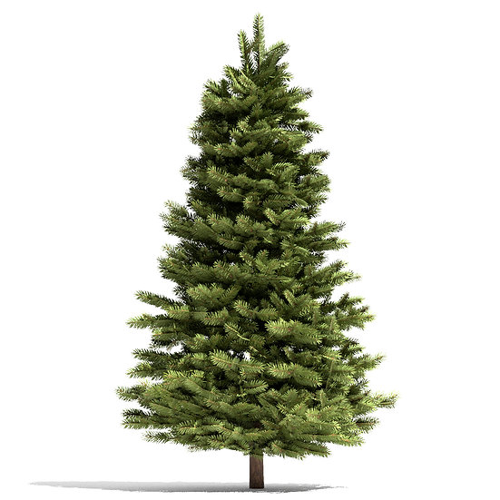 Pine Tree (Six-Foot, Five-Inch, Plain)