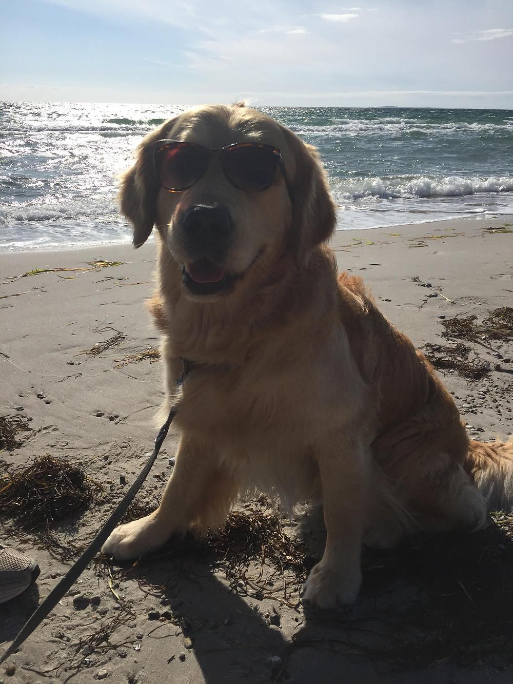 """Hach, was war das schön!Sonnige Grüße aus dem schönen Dänemark. Hier waren wir im Sommer und ich habe viel Lauftraining gemacht, den Strand rauf und runter, war schwimmen, und habe dänische Pölser gefuttert und natürlich - die Sonne genossen. Kraft tanken für weitere Abenteuer im Leben, wenn wieder der """"Ernst des Hundelebens"""" ruft."""