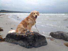 der_kleine_Seehund,_Urlaub_in_Dänemark.J