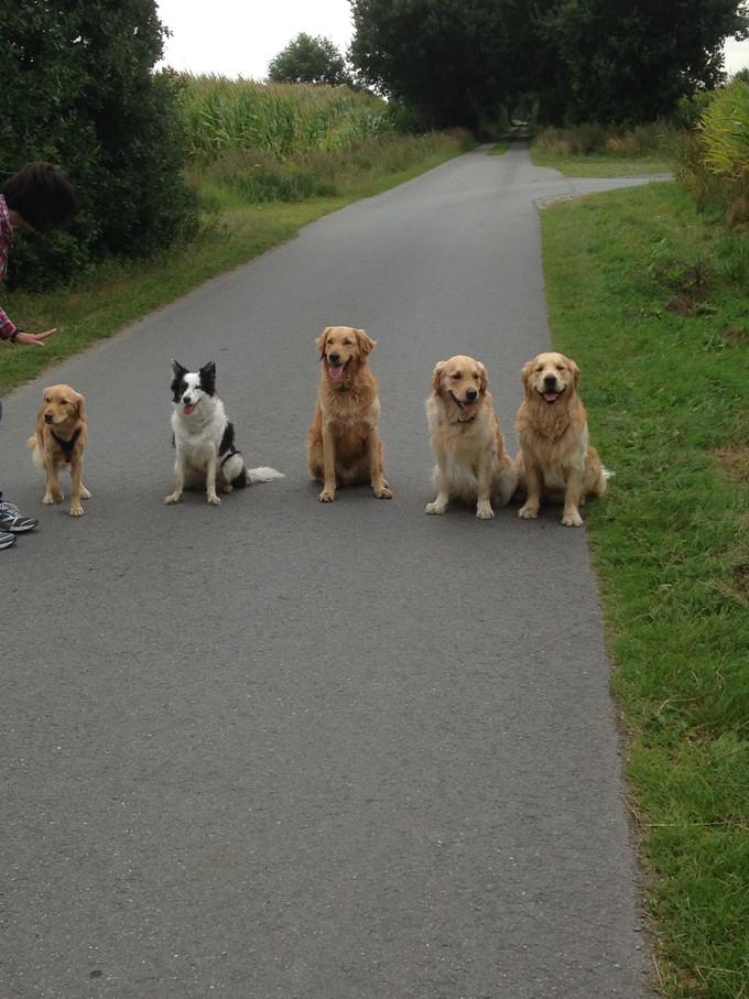 Hundetraining mit den Hundekumpels