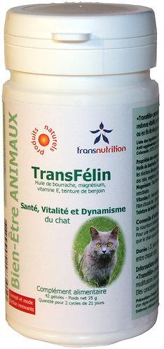 TransFélin