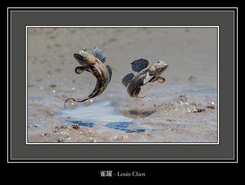 雀躍 - Louis Chen