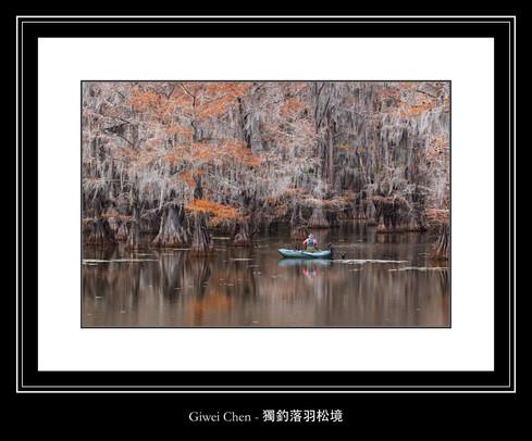 獨釣落羽松境 - Giwei Chen