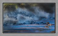TAPA 11月21日 (星期六 2pm - 5pm) 線上例會 - 特別請到本會 John Zhang 張寳平老師 為大家分享肯尼亚角马大遷徙的相片。