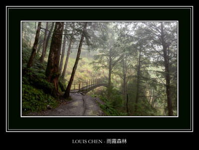 雨霧森林 - LOUIS CHEN