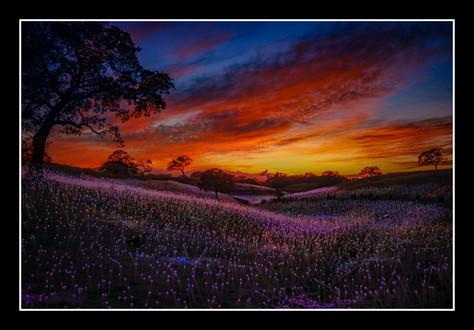 Field of Lights - Michelle Kao