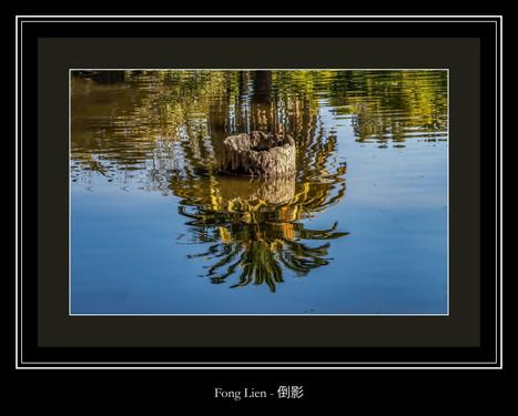倒影 - Fong Lien