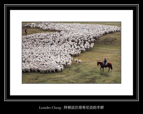 阿根廷巴塔哥尼亞的羊群 - Leandro Cheng
