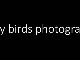 TAPA 12月05日 (星期六 2pm - 5pm) 線上例會 - 我們特別請到 Randy Wei 先生來為大家分享: Why Bird Photography?