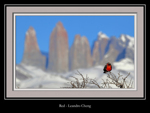 Red - Leandro Cheng