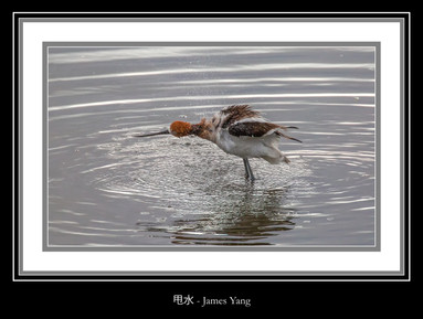 甩水 - James Yang