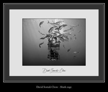 Shark cage - David Somali-Chow