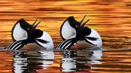 TAPA 12月07日 (星期六 2pm - 5pm) 例會 - 本次聚會特別請到本會張寶平老師(John Zhang) 主講《教你去打鳥》。