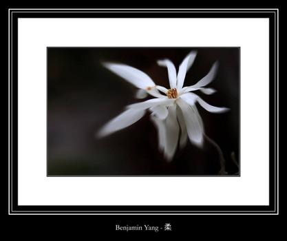 柔 - Benjamin Yang