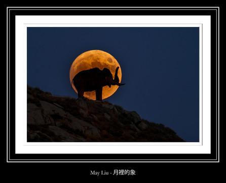 月裡的象 - May Liu