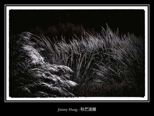 秋芒迷離 - Jimmy Hung