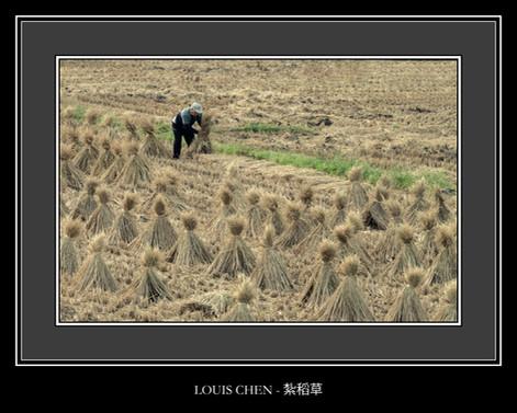 紮稻草 - LOUIS CHEN