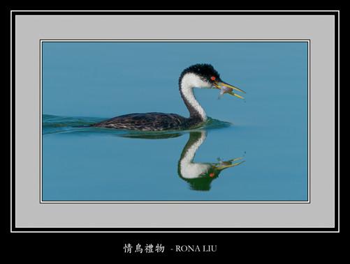 情鸟礼物 - RONA LIU